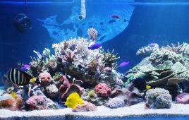 Sỏi trang trí hồ cá và những kiến thức liên quan bạn cần biết