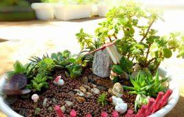 Sỏi trang trí chậu cây và những loại sỏi trang trí đẹp