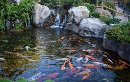 Lựa Chọn Mẫu Gạch Ốp Hồ Cá Sao Cho Vừa Ý? Nguyên Tắc Vàng Khi Chọn Gạch Ốp Hồ Cá