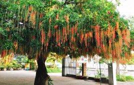07 Loại Cây Trồng Cho Sân Vườn Biệt Thự Mang Điềm May Cho Gia Chủ